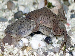 aquatic frogs character